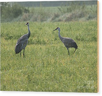 Wood Print featuring the photograph Strolling Cranes by Debbie Hart
