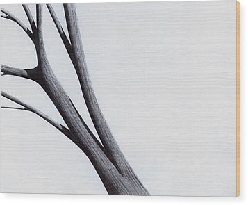 Wood Print featuring the drawing Strong Branches Between Light by Giuseppe Epifani