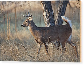 Wood Print featuring the photograph Strutting Buck by Jim Garrison