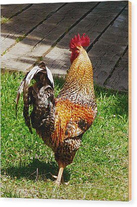 Strutting Rooster Wood Print by Susan Savad