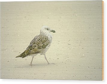Wood Print featuring the photograph Strutting Young Seagull  by Suzanne Powers