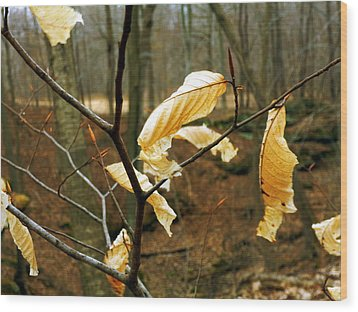 Wood Print featuring the photograph Stubborn Leaves by Jackie Carpenter