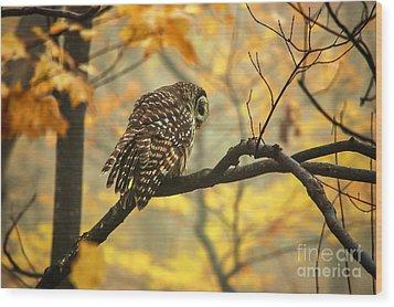 Stubborn Owl Wood Print by Debbie Green