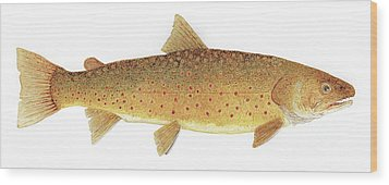 Wood Print featuring the painting Study Of A Bull Trout by Thom Glace