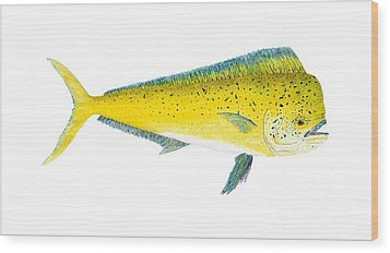 Wood Print featuring the painting Study Of A Mahi Mahi by Thom Glace