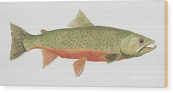 Wood Print featuring the painting Study Of A Male Dolly Varden Char by Thom Glace