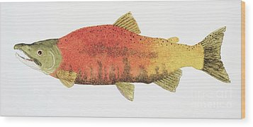 Study Of A Male Kokanee Salmon In Spawning Brilliance Wood Print