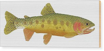 Study Of A Rio Grande Cutthroat Trout Wood Print