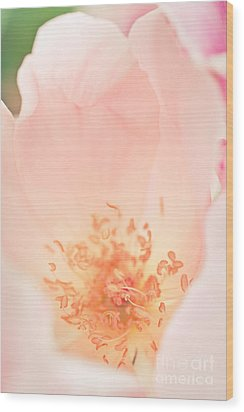 Study Of A Rose Four Wood Print by Lisa McStamp