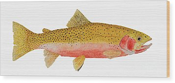 Study Of A Westslope Cutthroat Trout Wood Print
