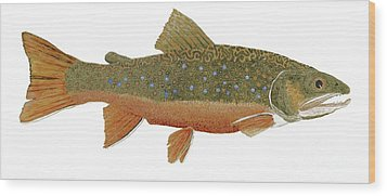 Study Of An Wild Eastern Brook Trout  Wood Print