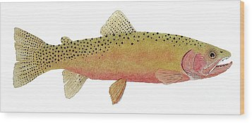 Study Of The Greenback Cutthroat Wood Print by Thom Glace