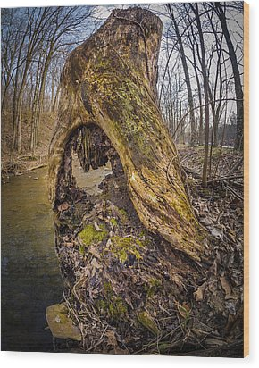 Stump Wood Print by Carl Engman
