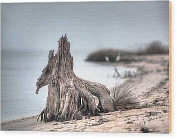 Stump Dragon Wood Print by Joan McCool