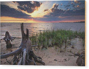 Stumps And Sunset On Oyster Bay Wood Print by Michael Thomas