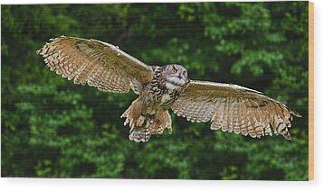 Stunning European Eagle Owl In Flight Wood Print by Matthew Gibson