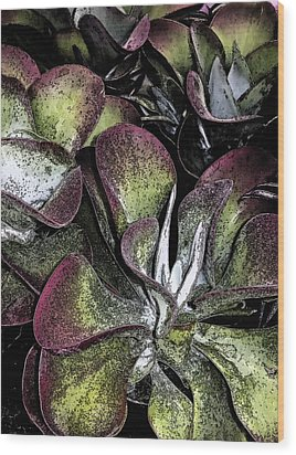 Succulent At Backbone Valley Nursery Wood Print by Greg Reed