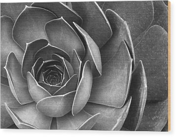 Succulent In Black And White Wood Print by Ben and Raisa Gertsberg