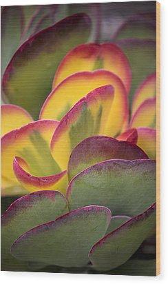 Succulent Light Wood Print by Garry Gay