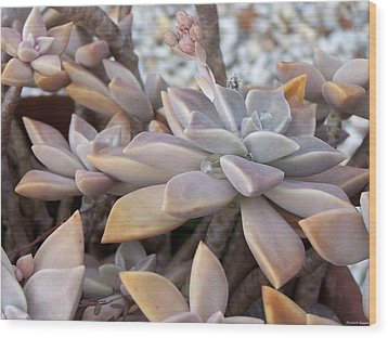 Wood Print featuring the photograph Succulent by Michele Kaiser
