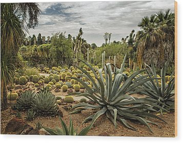Succulents At Huntington Desert Garden No. 3 Wood Print
