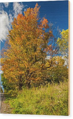 Sugar Maple 3 Wood Print by Steve Harrington