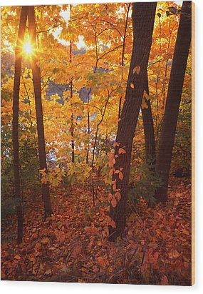 Sugar Maple Sunrise Wood Print