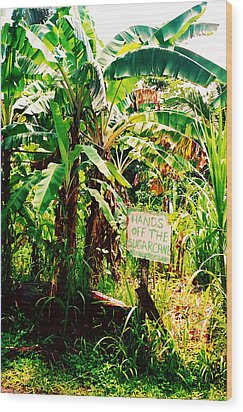 Sugarcane Wood Print by Kara  Stewart