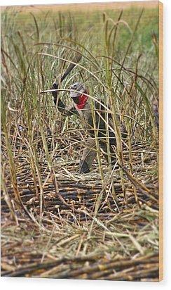 Wood Print featuring the photograph Sugarcane Slash 2 by Henry Kowalski