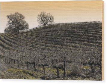 Suisun Valley Vinyards Wood Print