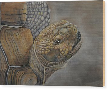 Sulcata Wood Print by Jean Cormier