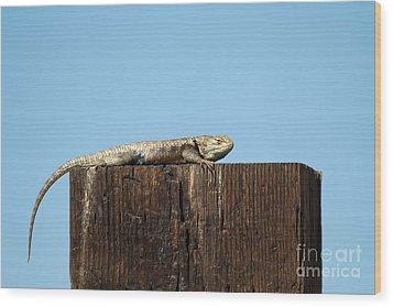 Sulky Lizard Wood Print by Martha Marks