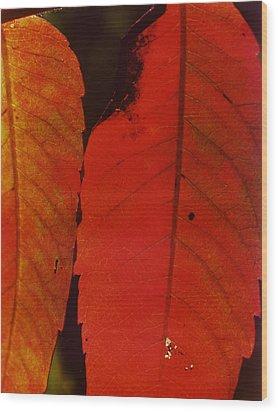 Sumac Leaves.jpg Wood Print