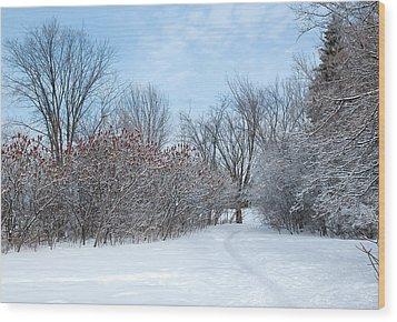 Sumacs Alongside The Path. Wood Print by Rob Huntley