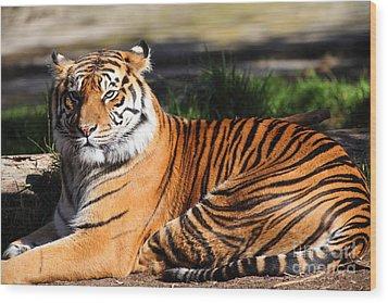 Sumatran Tiger 5d27142 Wood Print by Wingsdomain Art and Photography