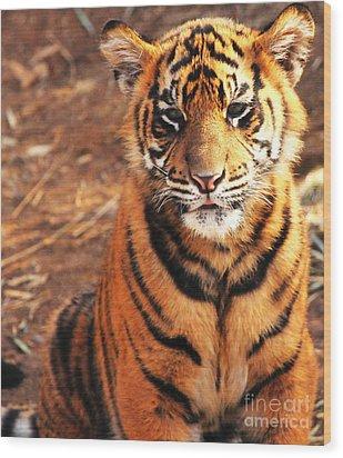 Wood Print featuring the photograph Sumatran Tiger Cub by Olivia Hardwicke