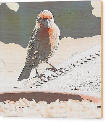 Summer Bird Wood Print by Artist and Photographer Laura Wrede