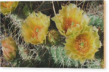 Summer Cactus Blooms Wood Print by Kae Cheatham