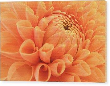Summer Dahlia Wood Print by Marc Huebner