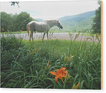 Summer Day Memories With The Paso Fino Stallion Wood Print by Patricia Keller