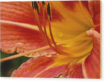 Summer Daylily Wood Print by Julie Andel