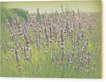 Wood Print featuring the photograph Summer Dreams by Lynn Sprowl