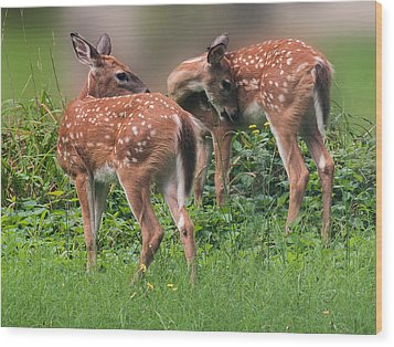 Summer Fawns Wood Print by Lara Ellis