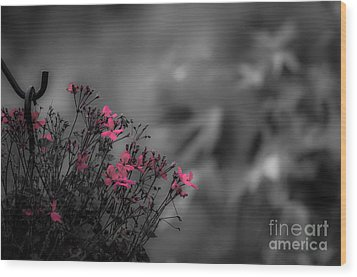 Wood Print featuring the photograph Summer Fleeing by Brenda Bostic