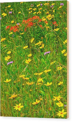 Summer Flowers On The Blue Ridge Parkway I Wood Print by Dan Carmichael