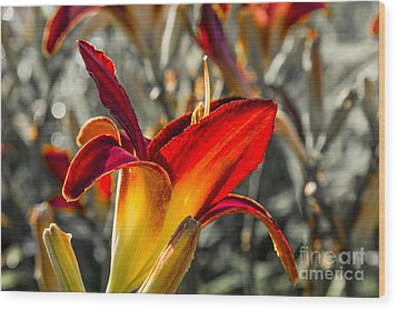 Summer Garden 2 Wood Print by Susan Cole Kelly Impressions