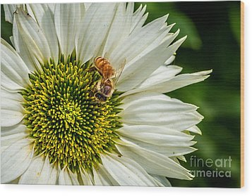 Summer Garden 3 Wood Print by Susan Cole Kelly Impressions