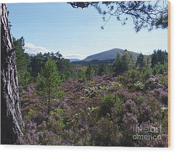 Summer In Abernethy Forest Wood Print