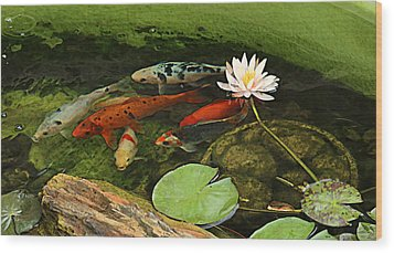 Summer Koi And Lilly Wood Print