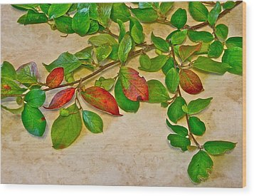 Wood Print featuring the photograph Summer Leaves by Johanna Bruwer